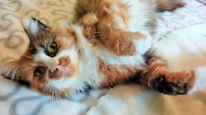 Beautiful Kat Blanchett has been adopted into a wonderful home