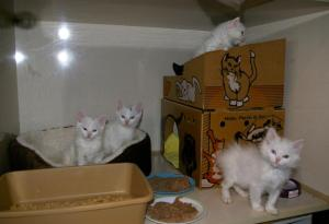 Kaleia's and her siblings while in foster with Elaine