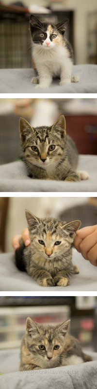 The vokra blog vancouver orphan kitten rescue association kitten season may be the cutest time of the year but it means a lot of extra costs and work for us here at vokra each year during kitten season we care spiritdancerdesigns Images